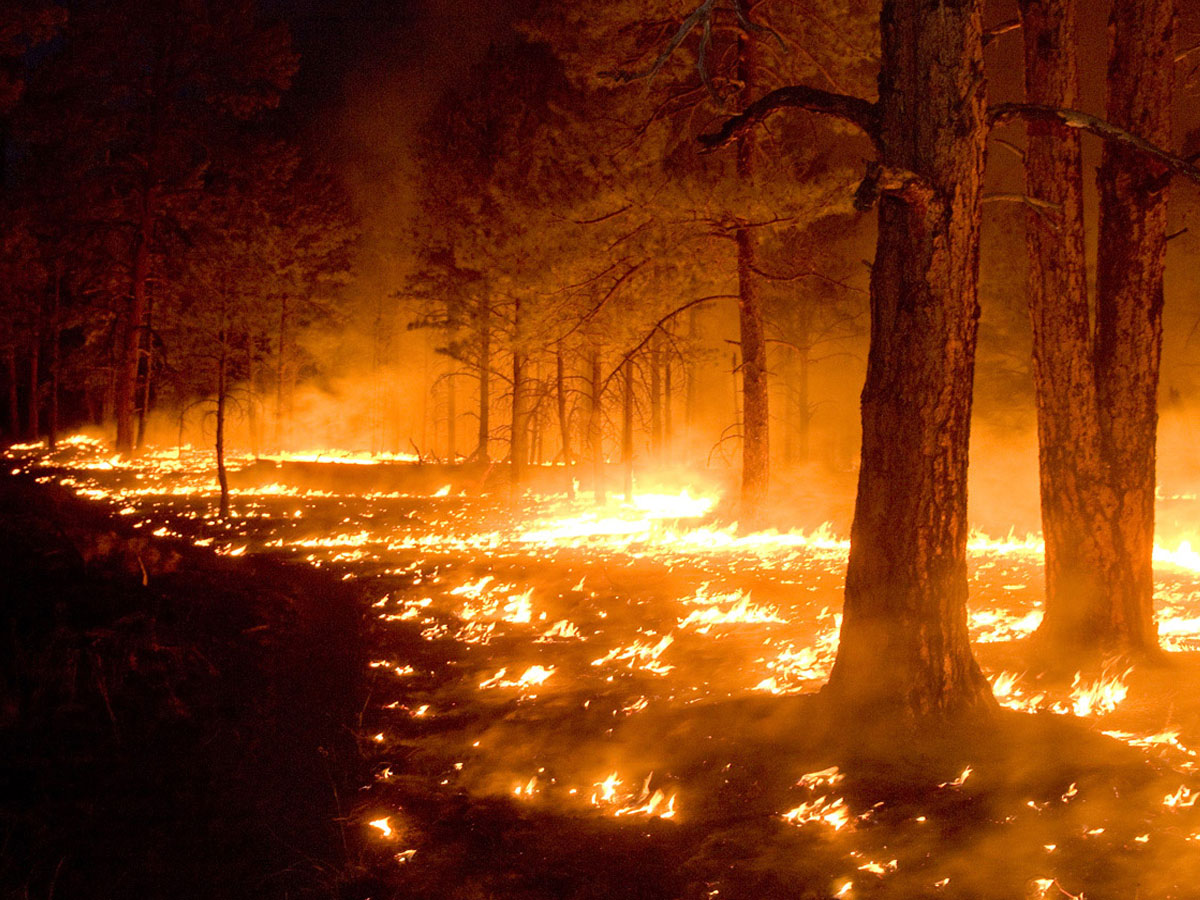Лесные пожары вКарелии: экипажи ЗВО обрушили 260 тонн воды напылающие леса
