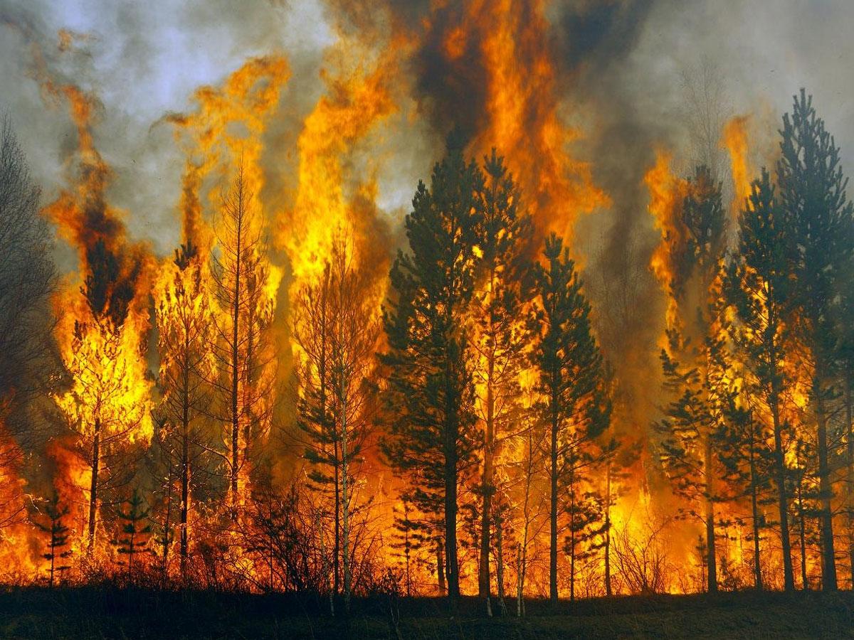 Очаг горения лесов в Калифорнии получил статус мегапожара
