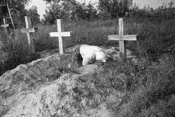 Печаль-раскаяние от того, что человек неверно вел себя с умершими